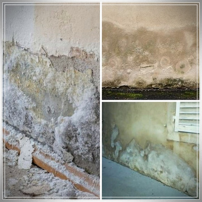 Cómo eliminar el salitre de las paredes 👷♂👷♀