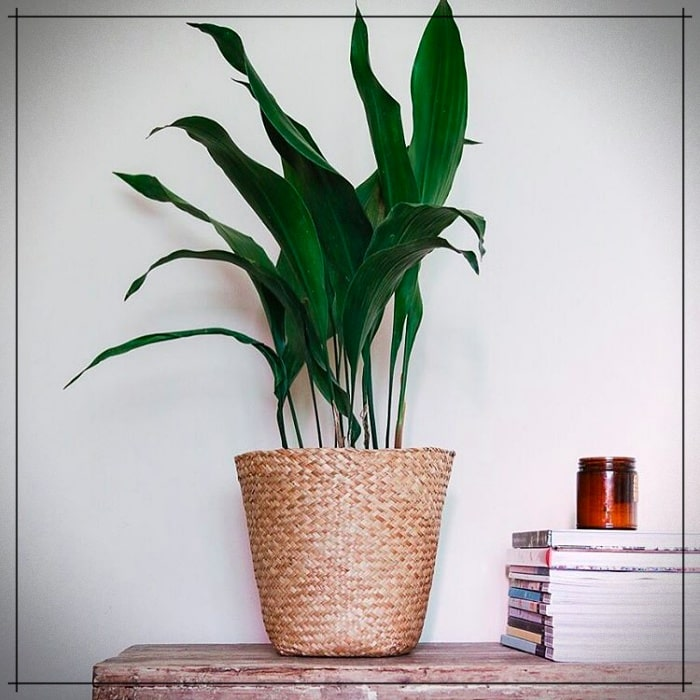 The 5 most resistant indoor plants