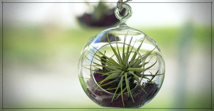 The 5 most resistant indoor plants